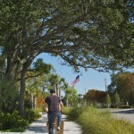 Gorgeous trees abound in Sarasota (and they're not all palm trees!)