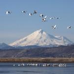 Larry Photo Tule Lake